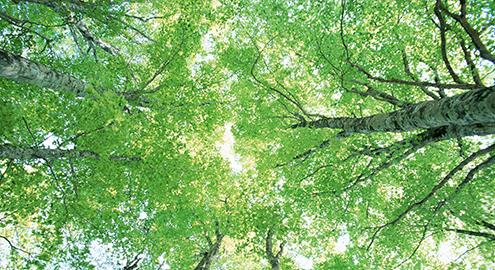 「無垢材」は、自然が生み出した建築材
